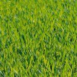 grass-1088114_1280